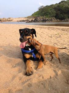 Pet Friendly Beaches on the Dolphin Coast