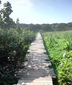 Wooden board-walk over the Ohlange River in Umhlanga, Kwa-Zulu Natal.