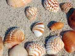 shells-in-ballito
