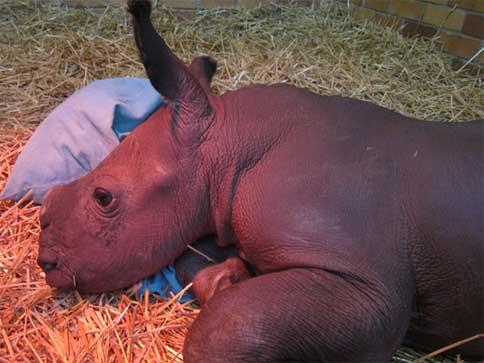 Rhino Orphanage needs funds