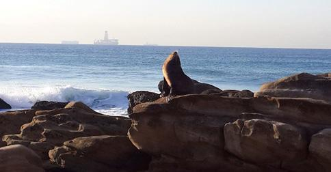 Umhlanga UIP takes care of seal