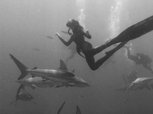 Olivia Taylor Sharks