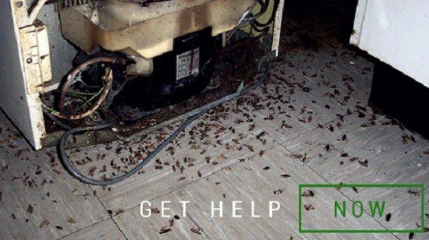 Cockroach Control Durban KZN