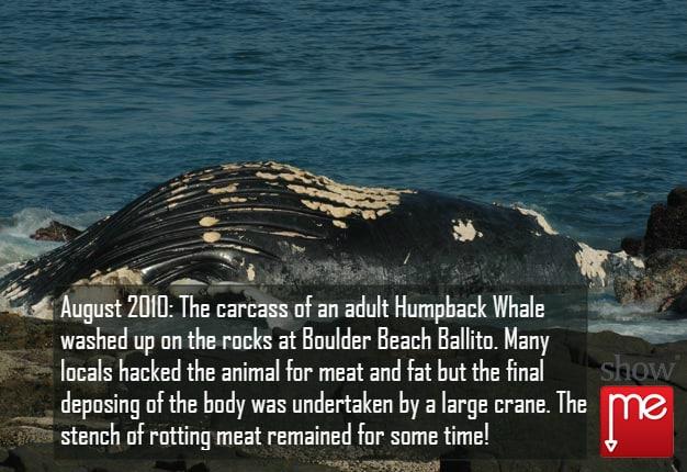 Beach Whale in Ballito