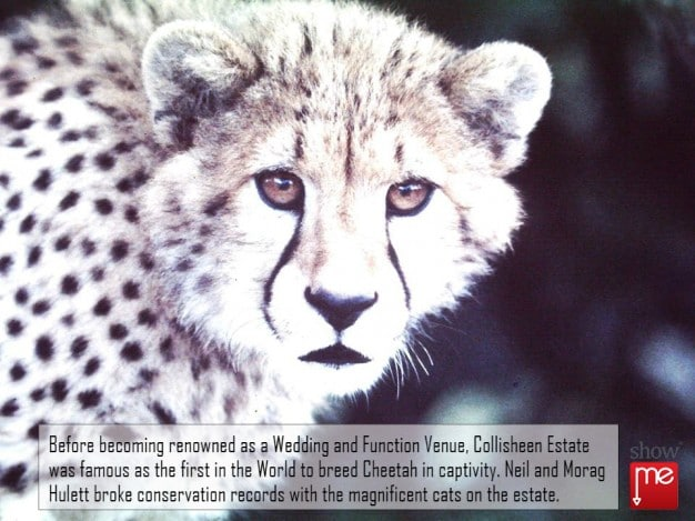 First Cheetah Bred in Captivity in South Africa