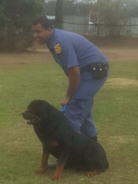 k9-stitch-and-singh