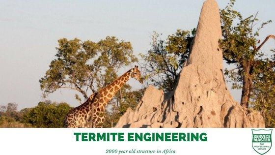 Termite Control Durban KZN