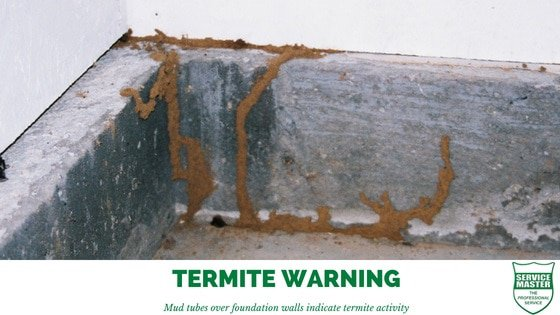 Termite and White Ant Pest Control South Africa