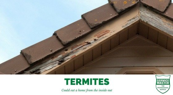 Termites in a home and how to get rid of them