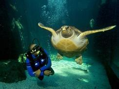 Turtle & Diver at the Two Oceans Aquarium, Cape Town