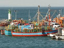 Colourful Fishing Boats in Kalk Bay Harbour, Cape Town