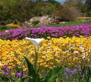 Kirstenbosch Gardens CapeTown
