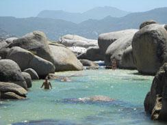 Swimming with Penguins at Boulders Beach, South Africa