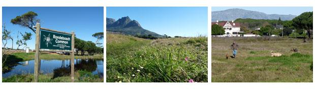 Rondebosch common - a perfect running trail