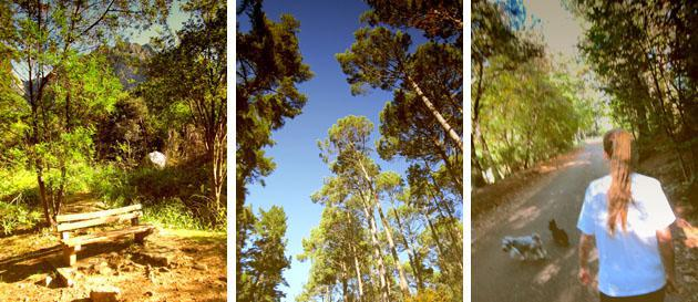 Scenery from Newlands Forest