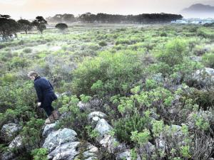THREATENED: A luxury housing development is being proposed for Protea Ridge above Kommetjie. The land is part of a World Heritage Site. The vegetation on the land is rated 100 percent irreplaceable by the city councils environmental resource department, which does not support the scheme. Photo: Brenton Geach