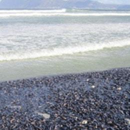 Cape Town beachgoers warned against False Bay mussel harvest