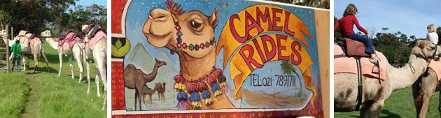 inhoff-camel-rides-copy