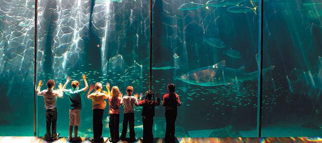 two-oceans-aquarium-copy