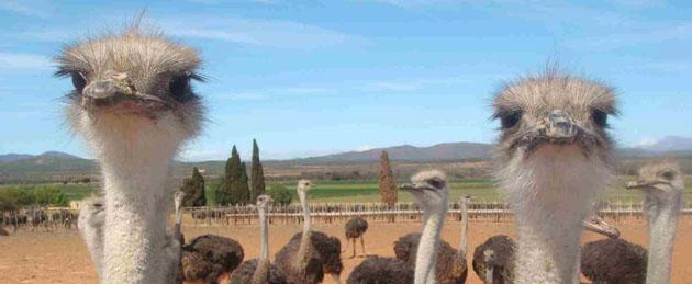 west-coast-ostrich-ranch-copy