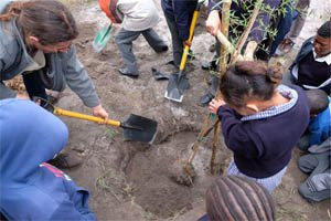 'It's all good' tree planting workshop