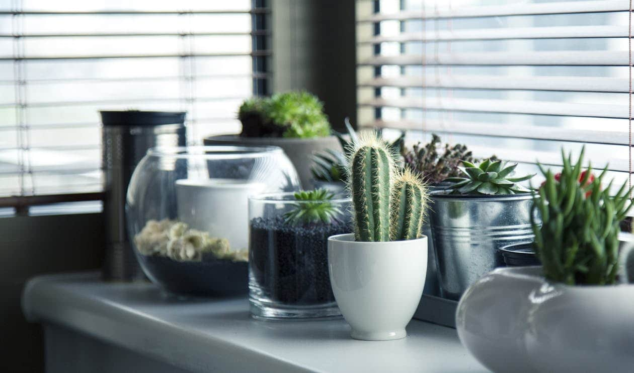 Plants that thrive in your bathroom   Cape Town