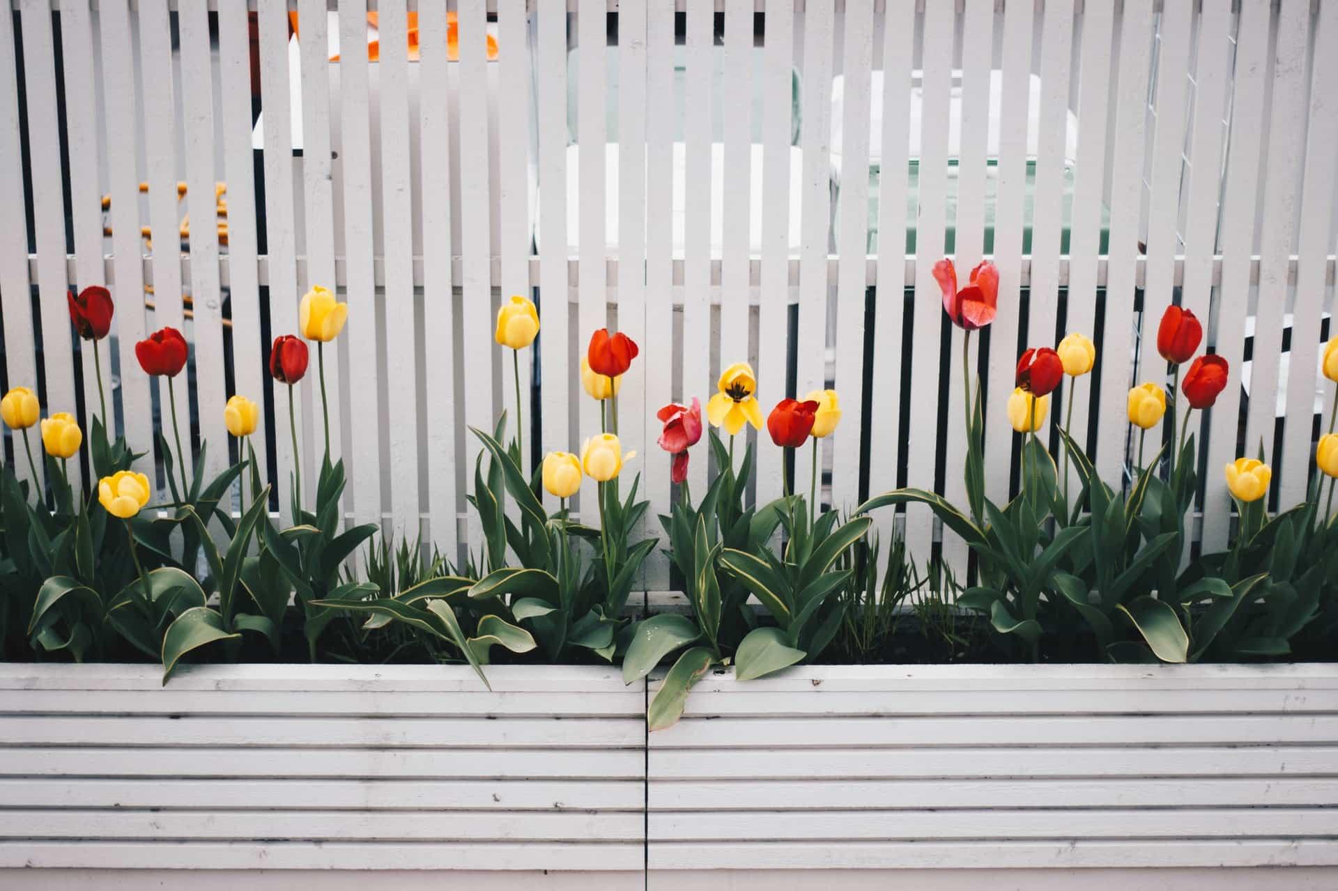 How versatile garden fences really are
