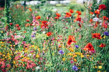 3 Flower festivals