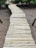 Raised walkway at the Beachwood Mangroves Nature Reserve