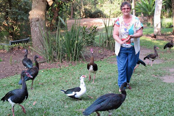 Feeding the water birds at the Amanzimtoti Bird Sanctuary