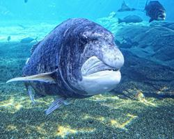 Www Shaka Marine World Com, Check Out Www Shaka Marine World Com ...