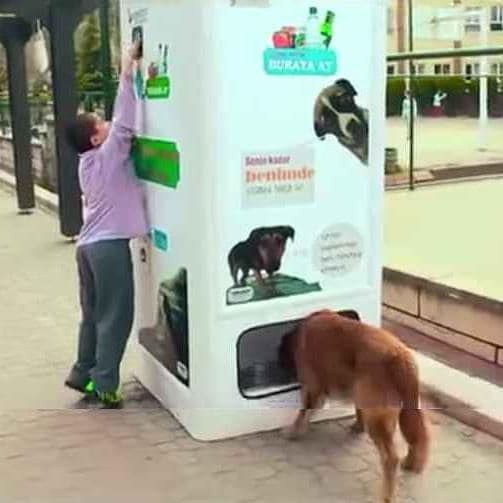 For Every Bottle, This Recycling Machine Dispenses Dog Food for Strays