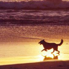 Life's a real beach for Italy's pooches