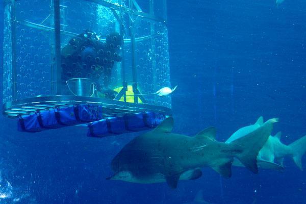 3bb4b0dc61186 feeding-the-sharks-at-ushaka-marine-world-6