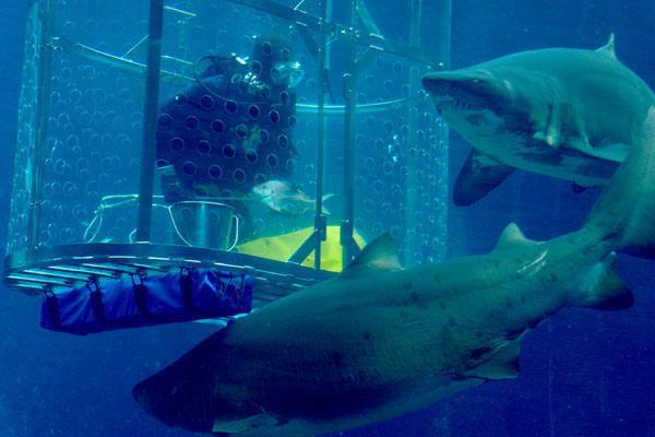 c8a2cb1c90b69 feeding-the-sharks-at-ushaka-marine-world-9