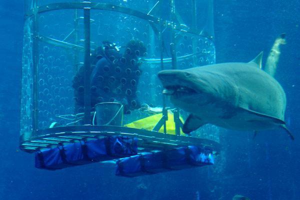 Shark bait at uShaka Marine World   Durban