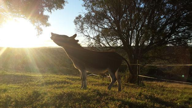Lindale Farm