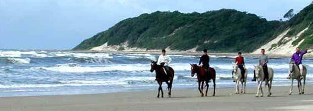 Chintsa Horses