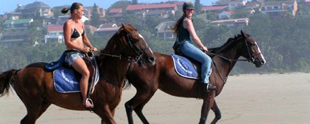 Chintsa Horses cropped