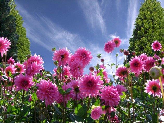 a-beautiful-day-1170686_960_720
