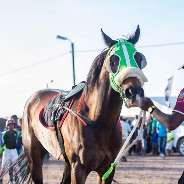 Berlin November Traditional Horse Racing Festival