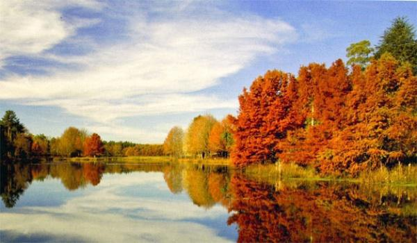 Artistic autumn reflections in Kenmo Lake.