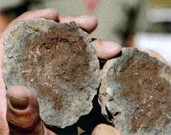 Dinosaur eggs, dating back to the Triassic era (230 - 200 million BC) were found lodged in the mudstone at Rooidraai. These are the oldest eggs with foetal skeltons of this era ever found.