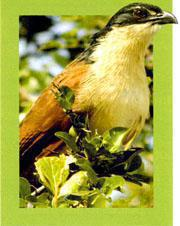 Burchell's coucal is just one of more than 300 bird species found in the park.