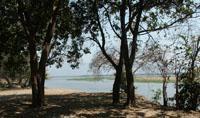 Private campsite at Mana Pools