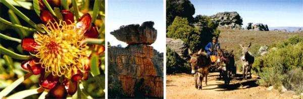There are some cool pools in Sassakloof on the way to Wupperthal; spring see's a profusion of flowers, including proteas; a fat hen in rock; Devon Viljoen leaves the donkey work to his team