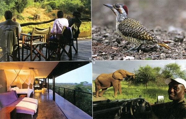 5. Pafuri Camp overlooks the Luvu-vhu River.6. Bennett's woodpecker feeds on the ground.7. Rooms at The Outpost are open to the bushveld.8. Enos Mngome-zuiu is head guide at Pafuri Camp.