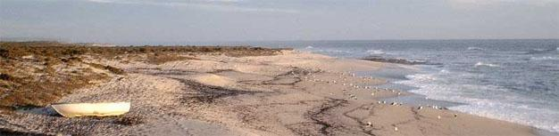 Lamberts Bay Beaches