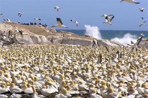 Lamberts Bay Bird Island