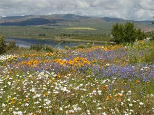 Ramskop Nature Reserve Clanwilliam